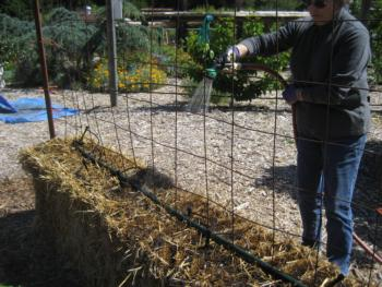 As In The 2013 Demonstration, Two Bales Of Straw Were Placed Cut Side Up,  End To End As Set Out In The Straw Bale Gardens Book. We Also Installed  Concrete ...