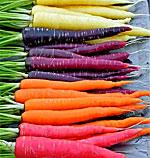 Colorful Carrots!