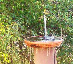 Be kind to birds—break up<br>ice in bird baths.<br>(click to enlarge)