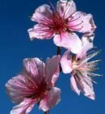 bud swell - full bloom-1