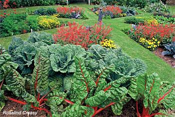 Edible landscape