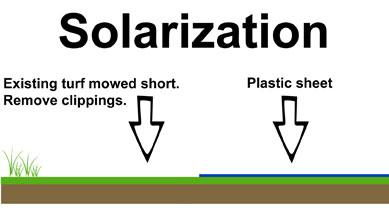 1-Solarization