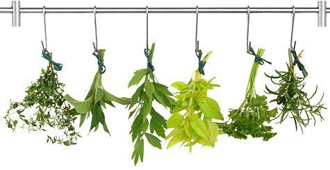 herbsDrying475