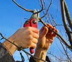 Pruning Workshop