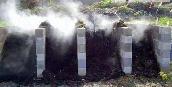 Hot compost (click to enlarge)