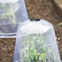 Cloches made of plastic or glass protect plants and last several seasons.