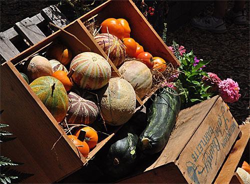 Harvest Day 2016