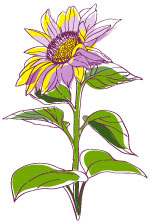 sunflower17wholeLeft