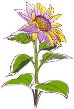 sunflower17wholeRight