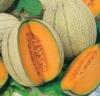 Retato Degli Orolani melon