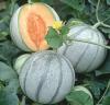 Savor melon