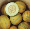 Hoagen melon