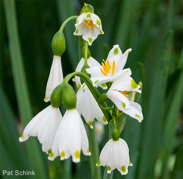 Sacramento county master gardeners sacramento mgs - What does it mean to be a master gardener ...