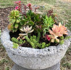 Hypertufa Planter Workshop