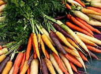 08-carrots colorful-1